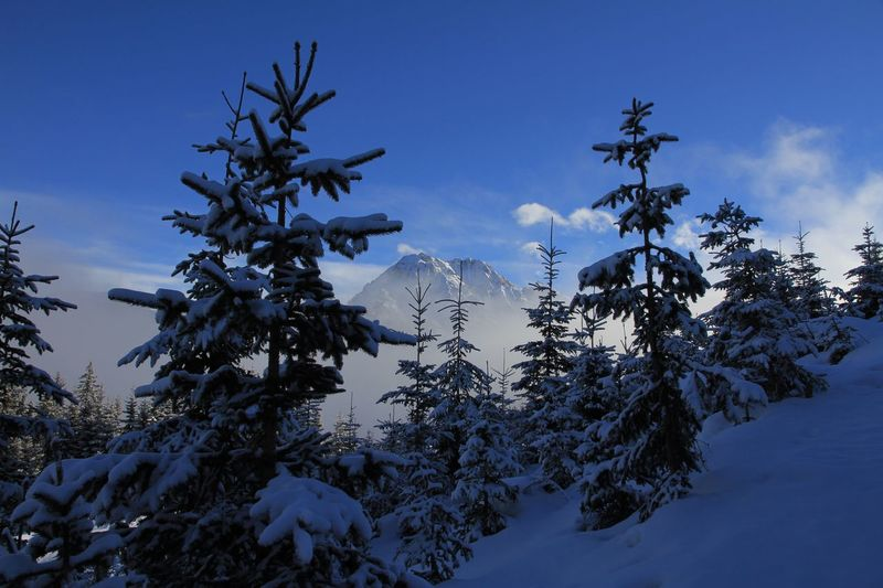 Pine Trees On Snow Covered Mountain Against Sky