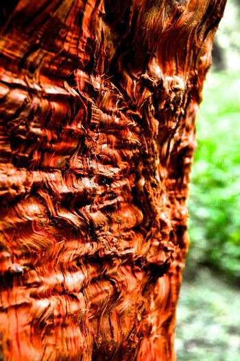 Textures And Surfaces Tree Tree Trunk Beauty Of Nature Focus On Foreground Outdoors Texture Taiwan Alishan,Taiwan Alishan Mountain