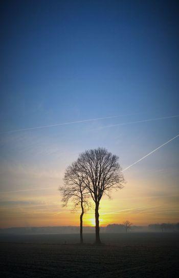 Sunrise session (part 2)... Sunrise Nature Hugging A Tree Silhouette