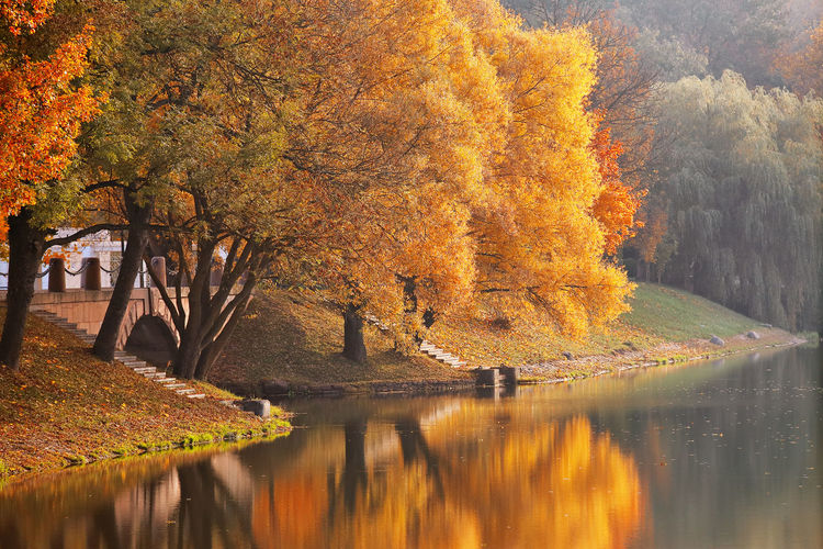 Illuminated tree by river against sky during autumn