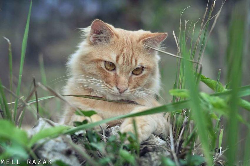 Cat. Vscomalaysian Vscocam VSCO Vscoperak Vscomalaysia Cats Cat Lovers Cat Photography Cats 🐱 Cat♡