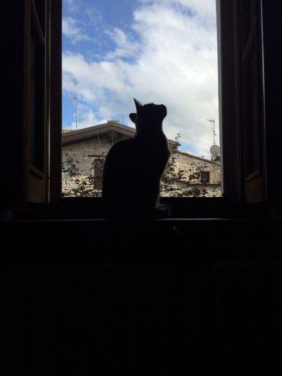 La visione di Nobu