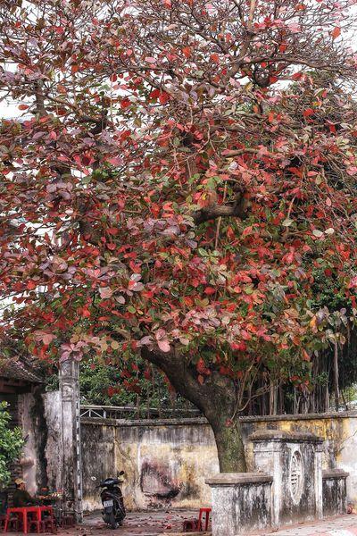 winter instead of leaves 3