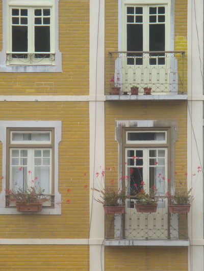 #Greetings From Lisbon Architecture Building Exterior Built Structure Close-up Day Flower Growth House Lisbon Lovely Lisbon My Beautiful Lisbon No People Old Building  Outdoors Plant Postcard Potted Plant Residential Building Romantic Photo Romattic Lisbon Window Window Box Windows Fith Flowers Yellow Building