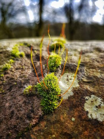 close-up of some rock Moss Malephotographerofthemonth Creative Light And Shadow Color Photography EyeEm Best Shots - Nature Moss Close Up Rock Moss Growth Nature Plant No People Outdoors Day Close-up Focus On Foreground Beauty In Nature Fragility