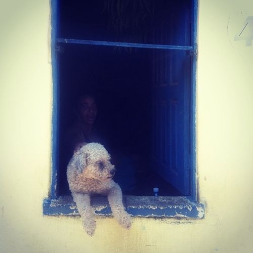 Another local doing some Tourist spotting! Maninbrazil Brazil Dogs This guy literally sits there all day every day ;)