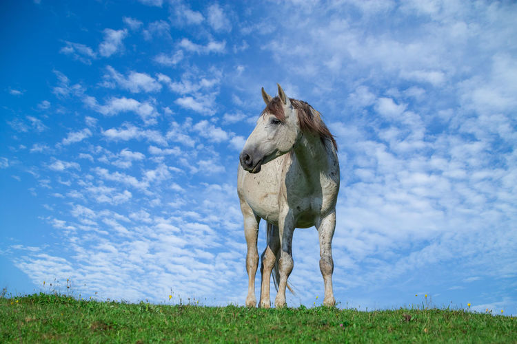 View of a horse on field against sky