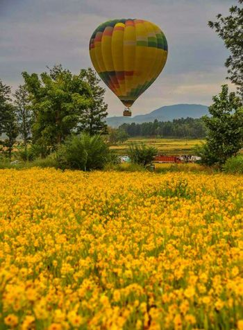 Perspective Perspectives On Nature Adventure Agriculture Ballooning Festival Beauty In Nature Day Field Flying Hot Air Balloon Landscape Mid-air Multi Colored Nature No People Outdoors Rural Scene Scenics Sky Tree