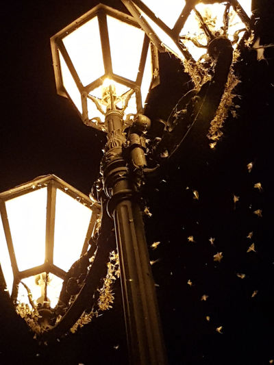 Architecture Close-up Day-fly Statue Electric Lamp Electric Light Illuminated Light Lighting Equipment Low Angle View Mayfly Nature Night No People Ornate Street Street Light Summer