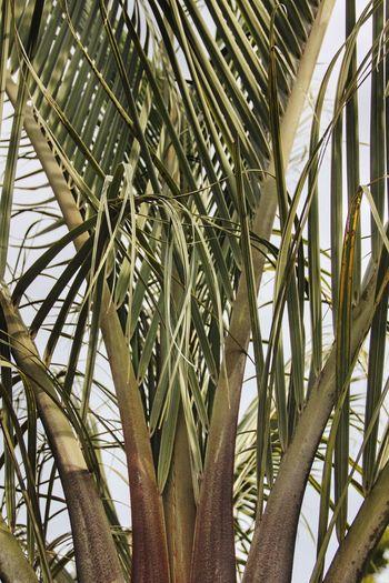 Palm Tree Day