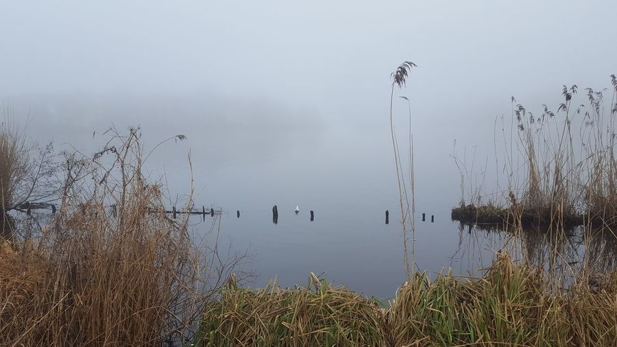 Alster Außenalster Germany🇩🇪 Hamburg Hamburg City January January 2018 Winter Fog Außenalster Beauty In Nature Foggy Foggy Day Germany Lake Lake View Mystical Atmosphere Nature No People Outdoors Peaceful Peaceful And Quiet Silence Of Nature Tranquil Scene Water Reflection Tranquility Scenics Animal Themes Bird Plant