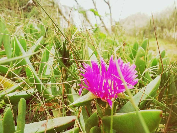 Flowers Eyemnaturelover Fraser Island