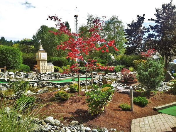 Beauty In Nature Flower Funtimeswithfriends Funtimeswithkids Growth Minigolf Nature Ornamental Garden Outdoors Tree