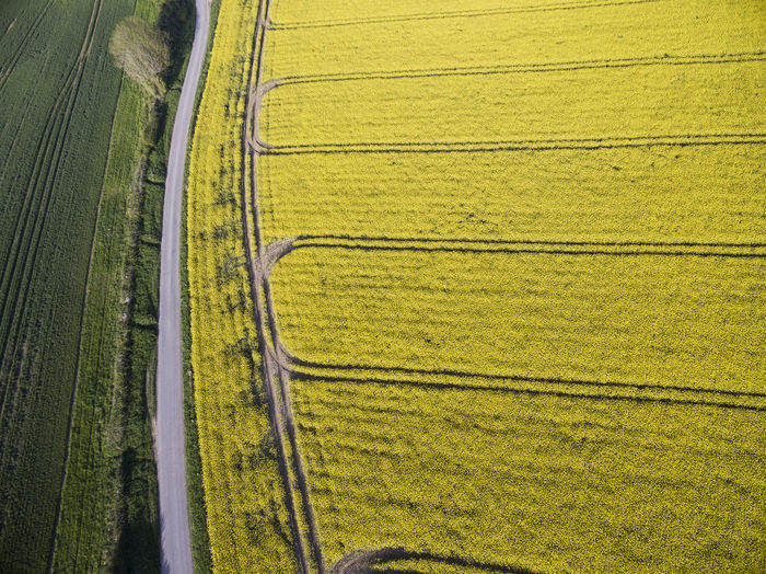 An aerial view of a Rapeseed field in the heart of the English countryside. Land Field Agriculture Rural Scene Plant Environment Scenics - Nature Landscape Aerial View Nature No People Growth Farm High Angle View Green Color Beauty In Nature Grass Tranquil Scene Tranquility Day Outdoors Plantation Fields Rapeseed
