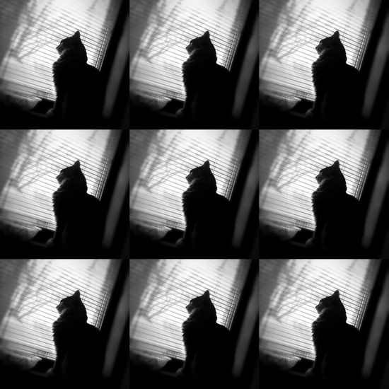 My kitty looking out the window waiting for Spring Animal Themes Blackandwhite Photography Box Cat Domestic Cat Glass - Material Graphic Design Indoors  Lifestyles Mainecoon Men Minneapolis Outline Person Pets Shadow Silhouette Sitting Spring Standing Tabphotography Togetherness Unrecognizable Person Window Windows