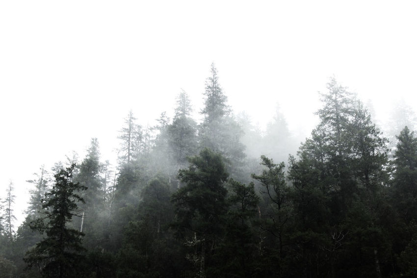 Misty mountains Tree Outdoors Beauty In Nature Forest Landscape Winter Nature Fog No People Mountain Sky Day Branch Pnwnaturescapes Beauty In Nature Scenics