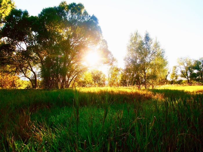 Stay gold EyeEmNewHere Grass Nature Field Sunset Sunlight Tree Sunbeam Scenics Sun Rural Scene Outdoors Meadow Beauty In Nature Tranquil Scene Summer Landscape No People Growth Green Color Plant EyeEmNewHere EyeEmNewHere