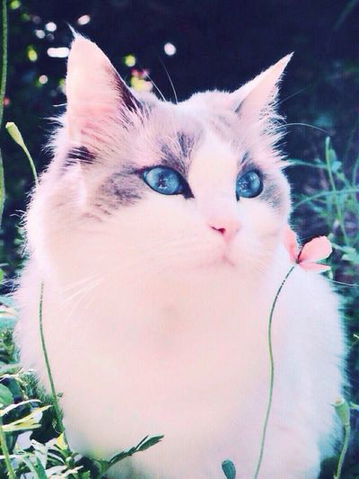 Inthesun Surrounded By Green  Relaxed Cat Ragdollcat Cat And Flower Lazy Afternoon BREEZY Cats Of EyeEm Chat Katze
