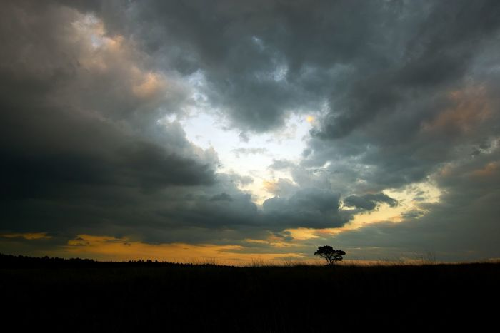 Lonely Tree Beauty In Nature Cloud - Sky Dramatic Sky Field Landscape Nature No People Orange Color Scenics Sky Sunset Weather