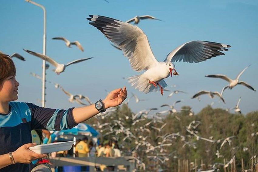 • ====» โผบิน เพื่อ ประทัง «==== • • • Seagull Nature_sultans Natureaddict Naturelovers Bird Birds Instabird Siamthai_ig Loves_siam Webangkok Bangkokspirit Fujifilm Fujixseriesclubthailand Fujifilm_id Instatravel Igersthailand Igersworldwide Thailand_allshots Capture_today Ig_thailandia Ig_bangkok Igmasters Adayinthailand Walkwaywhy Ig_worldclub photooftheday