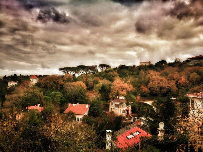 Sky Cloud - Sky Tree Outdoors No People Nature Day Storm Cloud Postcard BEYKOZAYRICALIKTIR. 😌😌😌 Istanbul City Beykoz, Turkey, Turkish, ıstanbul, Asia, Asian, Middle East, Black Sea, River, Riva, Riva River, Water, Winter, Season Beykoz Beykoz İstanbul