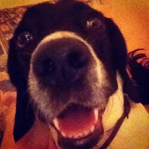 Everyday Joy with a Super Smile!!! Enjoying Life ILoveThis Mydog Mylove MySmile Photooftheday Ilovemydog Dogstagram