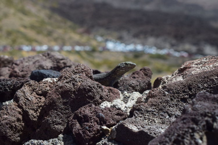 Close-up of rocks with lizard