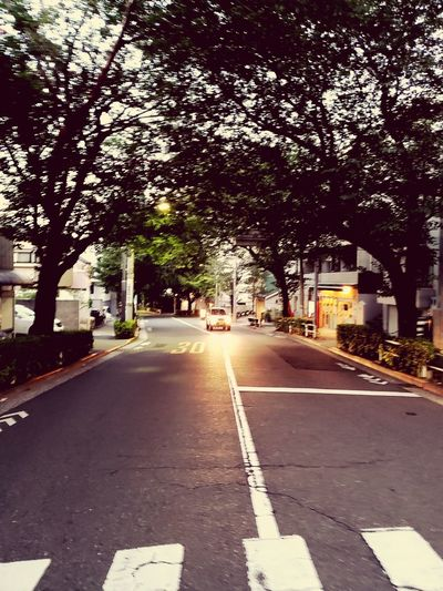 Tree Road City