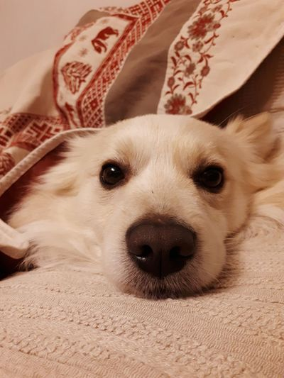 😊 Pets Portrait Dog Looking At Camera Lying Down Close-up My Best Photo Humanity Meets Technology #NotYourCliche Love Letter