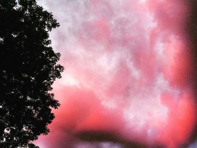 Pink Color No People Tree Low Angle View Outdoors Sky Day Nature Close-up Beauty In Nature Pixelated