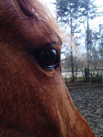 Horse Eye Wonderful