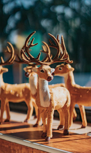 Close-up of deer on table