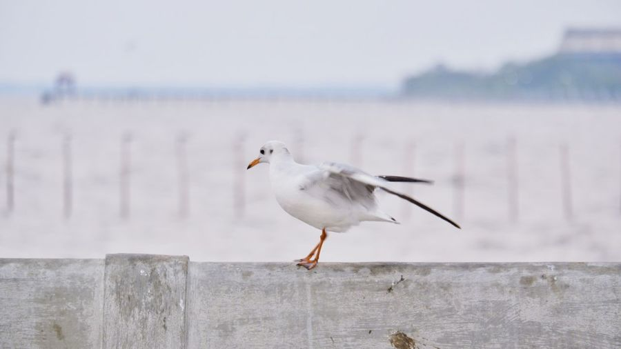 Close-up of seagull perching on wall against sea