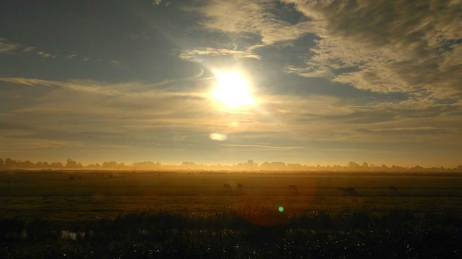 Sunset Sunlight Scenics Beauty In Nature Nature Sky Landscape Nature_collection Naturephotography Cows Farm View From Train Window Viewfromtrain Netherlands