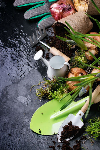 High Angle View Of Onions And Gardening Equipment On Wet Stone
