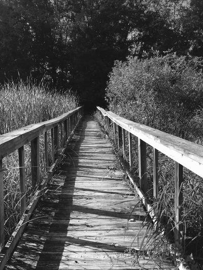 Bridge Wooden Bridge Narrow Narrow Bridge Wooded Path Wooded Area Trail