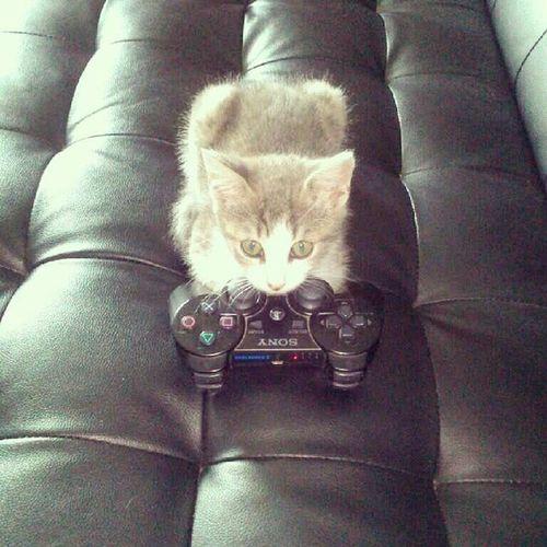 Pilou Playstation Djo Instacat