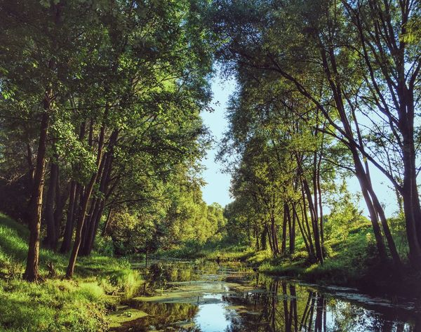 Tree Nature Growth Tranquility Beauty In Nature Scenics Tranquil Scene Reflection Green Color Outdoors The Way Forward No People Day Forest Tree Trunk Water Sky Naturelovers Nature Photography Nature_collection Beautiful Nature Beautiful Russia липецкаяобласть River
