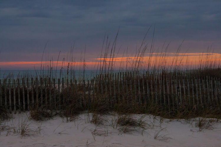 S Beach Fence Beauty In Nature Day Florida Grass Growth Gulf Of Mexico Nature No People Outdoors Plant Scenics Sea Sea And Sky Sea Oats Sky Sunset Tranquil Scene Tranquility Water