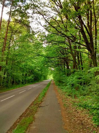 Nature EyeEm Nature Lover Beauty Forest Bike Poland Trees Eyeempoland Spring Landscape