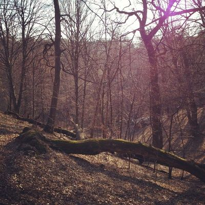 Весенний лес в контровом свете сырец Syrets Forest Lights лес