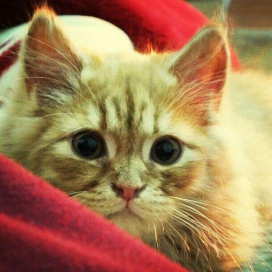 Cat My Cat Cute