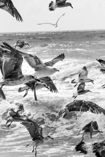 Seagulls flying against sea