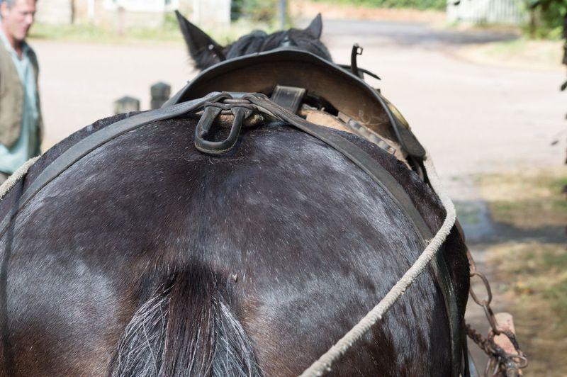 Horse Horse Power Shirehorse EyeEm Selects Agriculture Horse Close-up Livestock Working Animal Bridle Mane Horse Cart Hoofed Mammal Horsedrawn