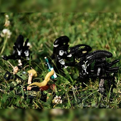 """Xenomorph warrior: """"Congratulations Dave it's a warrior! What are your hopes for the next one?"""" Dave:""""ehh I don't care as long as it's healthy. Would be cool to have a queen in the family though."""" Toyplanet_challenge_legoscale Xenomorph Minimate Minimates Aliens"""