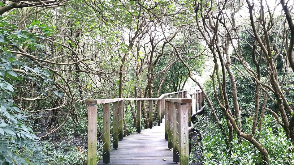 GodCreated Wetland Park Hk Love Nature Green Trees Take Photos Hanging Out Relaxing Enjoying Life HongKong 2016 August 2016 Hello World God Is Great. Summer ☀ Iamsoblessed EyeEm Nature Lover