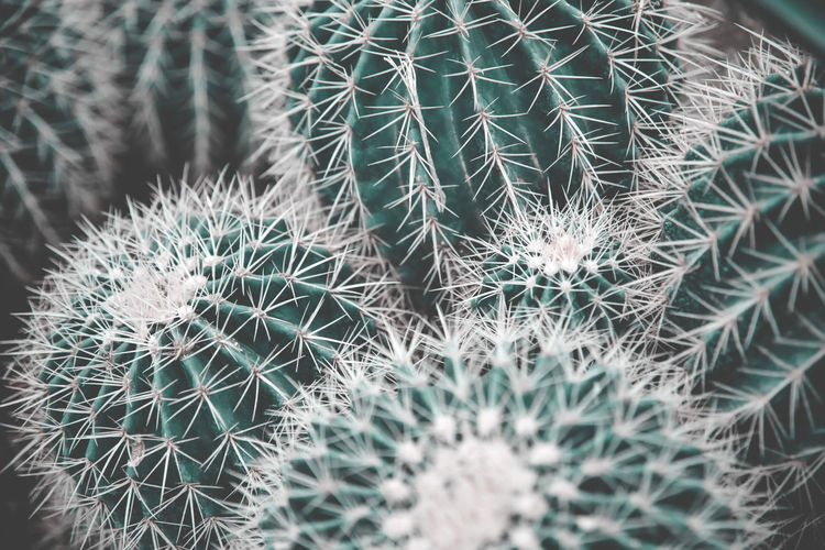 A bunch of green cacti Cacti EyeEm Nature Lover Green Nature Pain Succulents Backgrounds Barrel Cactus Beauty In Nature Cactus Close-up Danger Day Flowers Full Frame Garden Growth Nature No People Outdoors Plant RISK Spiked Thorn Tropical