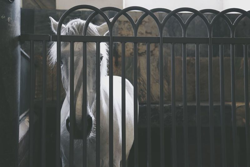 Horse standing in stable