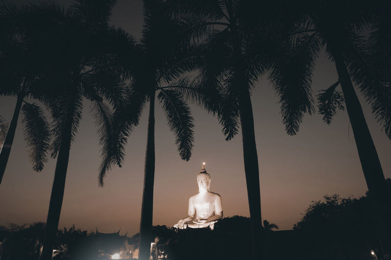 Large golden Buddha is the famous statue in Thailand. ASIA Asian Culture Buddha Faith Golden Night Lights Silhouette Sitting Spirituality Thailand Buddhism Famous Place Landmark Large Night No People Outdoors Palm Tree Religious  Sculpture Statue Sunset Tree