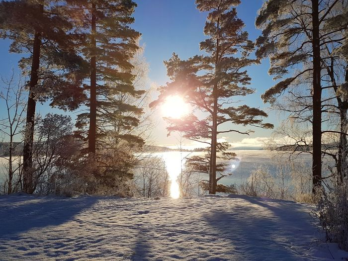 Sunlight Nature Tree Day Winter Outdoors Cold Temperature Sun Sky No People Snow Beauty In Nature Scenics Samsung Galaxy S7 Lysvik Sweden Värmland Love To Take Photos ❤